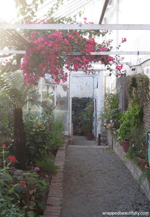 Lyman Estate Greenhouse bougainvillea-wb